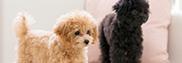 犬の予防接種