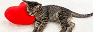 猫の予防接種